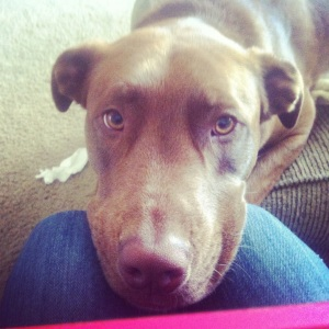 My dog, Archer.